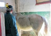 La Guardia Civil investiga a cinco personas por delitos de maltrato y abandono animal de varios equinos