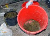 La Guardia Civil desmantela un activo punto de elaboración y venta al menudeo de distintas sustancias estupefacientes