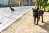 La nueva ordenaza de bienestar animal potenciará el control sobre las colonias felinas con la colaboración de protectoras y voluntarios