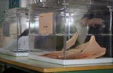 Un total de 20.191 electores pueden ejercer su derecho al voto en la próxima convocatoria electoral a las Cortes Generales en el municipio de Totana el 28-A