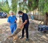Saorín: 'Las mascotas vuelven al centro de acogida de animales'