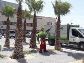 El servicio de jardines de STV Gestión pone en marcha la poda de 445 palmeras en los parques y calles de Torre Pacheco