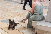 Torralba anuncia una campaña a principios de septiembre contra los orines de las mascotas