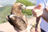 El Centro de Recuperación de Fauna Silvestre trata a una docena de águilas en lo que va de año