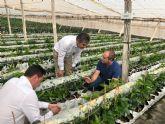 Pozo Aledo produce cuatro nuevas variedades de granada