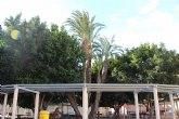Comunicado Ayuntamiento en relación a la caída de una palmera