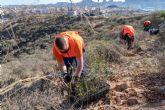 Fundación Repsol y el Ayuntamiento de Cartagena reforestan 17 hectáreas de monte en La Atalaya