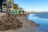 Infraestructuras sostiene que la retirada de algas en las playas del Mar Menor es la habitual y se realiza de forma manual