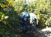La Guardia Civil detiene a dos personas por cometer robos y hurtos en fincas del Noroeste y Río Mula
