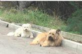 Organizan unas Jornadas de Concienciación Escolar sobre la Tenencia de Animales de Compañía