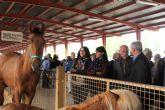 La Feria de Ganado Equino de Puerto Lumbreras abre sus puertas con eliminación de tasas para los ganaderos