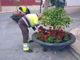 Más de 300 flores de temporada llenarán las jardineras de la pedanía de Cañadas de San Pedro