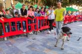 Centenares de amigos de los animales disfrutan en la Plaza San Francisco con los perros participantes en la Feria de Adopción