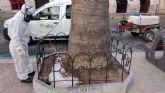 El Ayuntamiento de Águilas aplica tratamientos fungicidas a varias palmeras del municipio