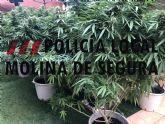 La Policía Local de Molina de Segura detiene a un joven por cultivar marihuana en su casa de La Alcayna