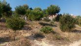ANSE y el Ayuntamiento de Mazarrón ponen en marcha un curso para integrar la biodiversidad en centros educativos