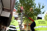 Infraestructuras da continuidad a los trabajos de seguimiento y acondicionamiento del arbolado