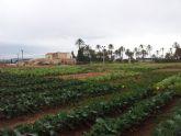 La UPCT lidera un proyecto europeo de 10 millones para diversificar la agricultura y hacerla sostenible