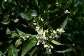 En diálogo con los aromas del azahar