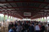 La Feria de Ganado Equino de Puerto Lumbreras reúne a más de 400 ejemplares de ganado