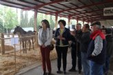 Unos 400 animales se exponen en la Feria de Ganado Equino de Puerto Lumbreras que comienza hoy
