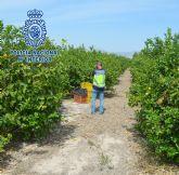Detenido por intentar estafar setenta mil euros tras hacerse pasar por dueño de una finca de limones