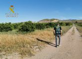 La Guardia Civil desmantela un grupo delictivo dedicado a la sustracci�n de c�tricos en Alhama de Murcia