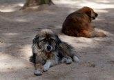Prorrogan el servicio de recogida de animales abandonados, vagabundos o extraviados; y el transporte y gesti�n de animales muertos