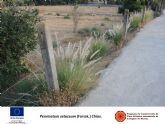 La Comunidad pide a los ayuntamientos que empleen plantas autóctonas en sus zonas ajardinadas en lugar de plantas exóticas