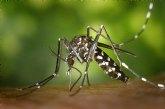 Las actuaciones contra el mosquito tigre continúan en las distintas pedanías y barrios del municipio