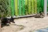 Luz verde al proyecto de Ordenanza Municipal de Bienestar Animal