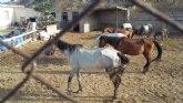 Ciudadanos denuncia el maltrato animal reiterado durante años de la granja de equinos de Sutullena