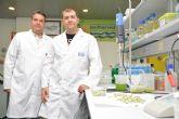 Una tesis de la UPCT desarrolla el procesado de semillas frescas de haba desvainadas y listas para consumir