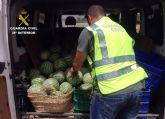 La Guardia Civil desmantela un grupo delictivo dedicado a la sustracción de sandías