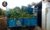 Desmantelan una extensa plantación de marihuana en el paraje archenero de Pago del Barranco.-