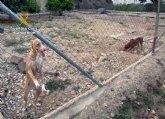 La Guardia Civil investiga a un vecino de Alhama de Murcia por maltratar de forma continuada a sus perros