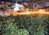 Desmantelan un invernadero con 230 plantas de marihuana en una vivienda de Cehegín
