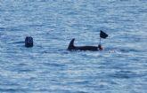 Primeros resultados del proyecto de evaluación de las interacciones de delfín mular con artes de pesca artesanales de ANSE