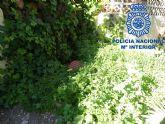 Detenidos un grupo de menores especializados en el robo con 'escalo' en domicilios