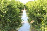 La Confederación, junto con los regantes de la Vega Media y Vega Baja, contempla diferentes alternativas para gestionar la alta conductividad del agua del río Segura