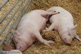 Sobre el modelo europeo de producción porcino