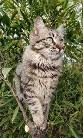 Las 5 claves básicas para el cuidado de los animales de companía en verano que senala De Mascotas