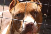 La Concejalía de Sanidad ha diligenciado un total de 50 licencias sobre tenencia de animales potencialmente peligrosos