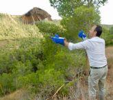 Medio Ambiente libera tres búhos reales tratados en el Centro de Fauna Silvestre 'El Valle'