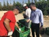 La producción de lima en la Región crece más de un 25 por ciento en los dos últimos años